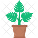 Philodendron Icon