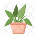 Philodendron Philodendron Pink Princess Plant Icon