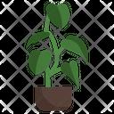 Philodendron Melanochrysum Flower Plant Icon