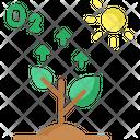Photosynthesis Oxygen Tree Icon