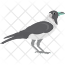 Pied Crow Icon