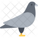 Pigeon Dove Animal Icon