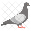 Pigeon Dove Flying Bird Icon