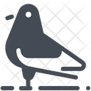 Pigeon Bird Icon