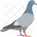 Pigeon Bird Fly Icon