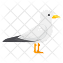 Pigeon Dove Bird Icon