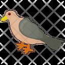 Pigeon Humming Pigeon Rock Pigeon Icon