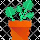 Pilea Plant Houseplant Pilea Plants Icon