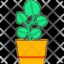 Pilea Plant Plant Pot Icon