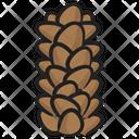 Pinecone Botany Gymnosperms Icon