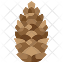 Pine Cone Nut Fruit Icon