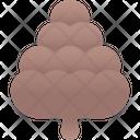 Pine Cone Pine Cone Icon