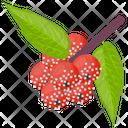 Pineberry Icon