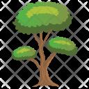 Pinus Bonsai Sylvestris Icon