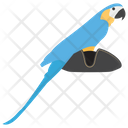 Pirate Parrot Pirate Bird Cockatoo Icon