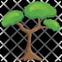 Pitch Pine Bonsai Icon