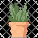 Plant Desk Plant Pot Icon