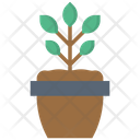Plant Growth Spring Time Icon