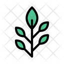 Plant Leaves Nature Icon