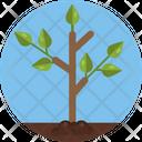 Plant Garden Leaf Icon