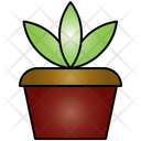 Plant Nature Rainforest Icon