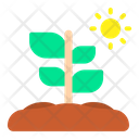 Plant Spring Nature Icon