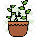 Plants Ecology Flower Icon