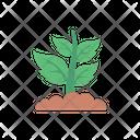 Plant Green Biology Icon