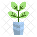 Plant Flower Plant Flower Icon