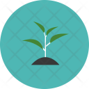 Plant Sprout Tree Icon