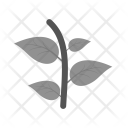 Plant Leaves Icon