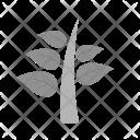 Plant Leaves Tree Icon