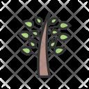 Plant Tree Leaves Icon