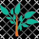 Leafy Plant Nature Icon