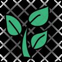 Plant Leaf Greenery Icon