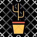 Cacti Cactus Cactus Plant Icon