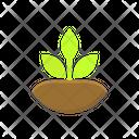 Plant Based Diet Icon