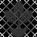 Plant Ecology Grow Icon