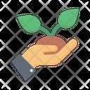 Plant Grow Plant Grow Icon