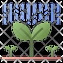 Plant Growth Icon