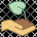 Plant leaf Icon