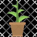Plant Pot Brown Icon