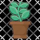 Plant Pot Plant Vase Plant Growth Icon