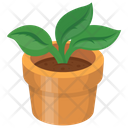 Pot Plant Leaves Icon