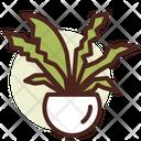 Nest Fern Icon