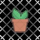 Plant Pot Plant Green Icon