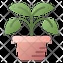 Plant Pot Nature Icon