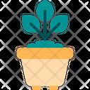 Plant Pot Plant Pot Icon