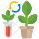 Plantation Plant Test Growth Test Icon