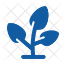 Growth Ecology Nature Icon